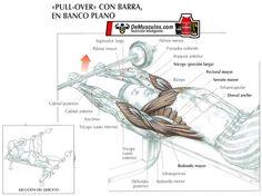Pull-Over con Barra en banco plano. Más ejercicios en www.EJERCICIOS.demusculos.com