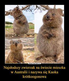 Brown Bear, Kangaroo, Cute Cats, Humor, Memes, Funny, Animals, Sweet, Cute Pets