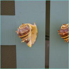 Seashell knobs/pulls.