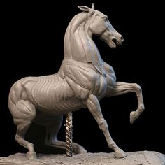 Horses ecorche different levels of muscle), Andrey Lizunov on ArtStation at… Horse Anatomy, Anatomy Art, Anatomy Drawing, Animal Anatomy, Horse Sculpture, Animal Sculptures, Horse Drawings, Animal Drawings, Horse Head