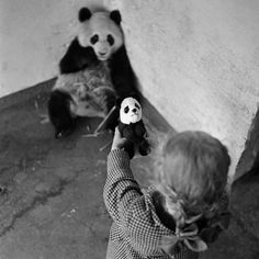 Young Steffi introduces Pandy the toy panda to Unity the real giant panda, (formerly Lien Ho) at Regents Park Zoo, London In December five giant pandas were smuggled out of China to England. Four of them were bought by London Zoo. Tumblr P, Animals And Pets, Cute Animals, Training Your Puppy, Vintage Photography, Inspiring Photography, Portrait Photography, All Dogs, Black And White Photography