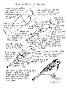 How to Draw Worksheets for The Young Artist: How To Draw a Sparrow, Worksheet and lesson.