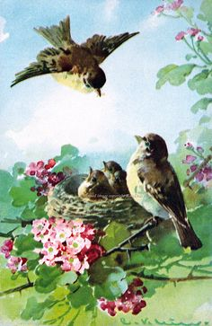 Birds Greeting Card - Papa Bird Feeds Babies - Vintage Style Note Card