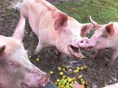 Farmed Animals... They're Just Like Us - ChooseVeg.com