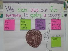 Mrs Jump's class: Chicka Chicka Boom Boom!--Names & Coconut Activities: sink/float, 5 senses, etc
