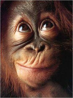 Baby Orangutan i loveeee themmm <3