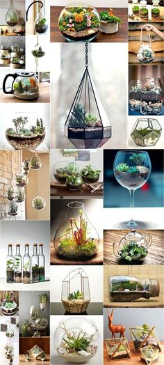 25 Types of Succulents & How to Grow It for Beginners Charming DIY Ideas for Succulent Terrariums Repotting Succulents, Types Of Succulents, Hanging Succulents, Succulents In Containers, Cacti And Succulents, Succulent Outdoor, Succulent Landscaping, Succulent Gardening, Terrarium Diy