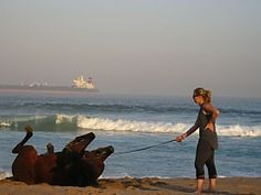 View our list of swimming with horses operators in Durban, South Africa - Dirty Boots Adventure Holiday, Adventure Tours, Beach Rides, Animal Experiences, Shark Diving, Adventure Activities, Beautiful Beaches, South Africa, Trips