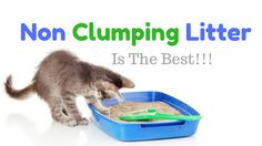 Non Clumping Cat Litter has many benefits over clumping litter. Find out here the benefitsand the best products that are available in the market today  https://catoverdose.com/best-non-clumping-cat-litter-review/