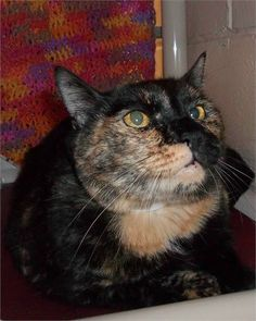 <>TIME IS UP<> PLEASE SOMEONE SAVE HER...URGENT....1/24/13  ALL SHELTER INFO: PLEASE Click This Link and Read To Avoid Common Questions Posted on Page. Thank you: https://www.facebook.com/HelpingTheAnimalsInTavaresFlLcas/info