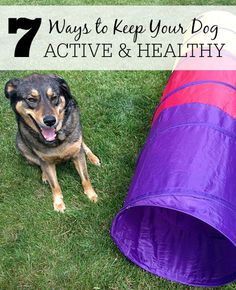 Want to keep your dog active & healthy? Check out these 7 tips.