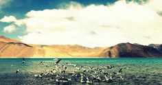 The Pangong Lake, Ladakh