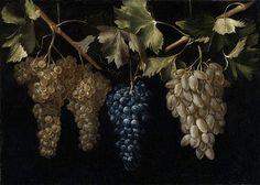 Grape vines. Bodegón con racimos de uvas, Juan Fernández el Labrador - Date unknown. (Spanish, c. 1629 - c. 1636)