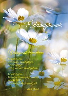 Anyák napjára - Virágosat álmodtam Wild Flowers, Greenery, Day, Creative, Plants, Kids, Milan, Rocks, Quotes