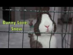 Bunny thoroughly enjoys the snow - March 10, 2015 - From today's Daily Bunny post: http://dailybunny.org/2015/03/10/bunny-thoroughly-enjoys-the-snow/ !