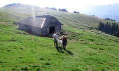 Kumm, kumm - alle drei versuchen, die Ziege nach oben zu bewegen. Umsonst. Foto: Doris