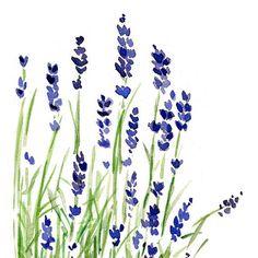Lavender plant art print of original watercolor painting ,purple and …