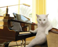 Nigel loved to perform for his ladies, but chatter while he played was not to be tolerated.