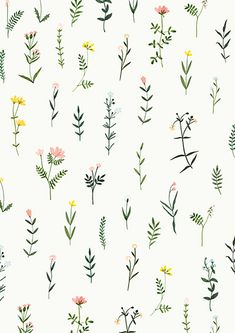 Botanical Clipart Wildflower Hand Drawn Floral Watercolor png flowers clip art illustrations plant flower sprig wedding floral elegant - Sites new Watercolor Wallpaper, Watercolor Plants, Floral Watercolor, Watercolor Design, Watercolor Logo, Watercolor Pattern, Watercolor Background, Drawing Hands, Wall Drawing
