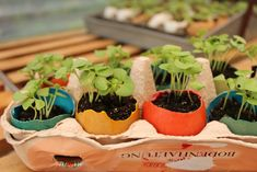 growing seedlings in