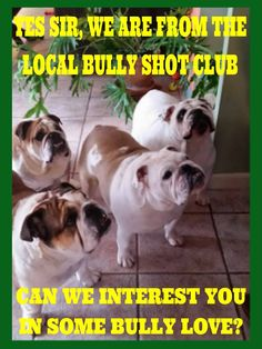 join our English bulldog group on facebook https://www.facebook.com/groups/bullyshots/