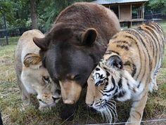Top 10 des amitiés invraisemblables entre #animaux ! #yummypets