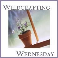 http://www.theselfsufficienthomeacre.com/  While traditional wildcrafting refers to gathering herbs and plants in the wild to use for food and medicine, Wildcrafting Wednesday is a weekly blog hop for sharing self-sufficiency and homesteading tips, tried and true home-remedies, and your favorite herbal uses.