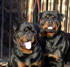 Secured by Rottweiler Inc.