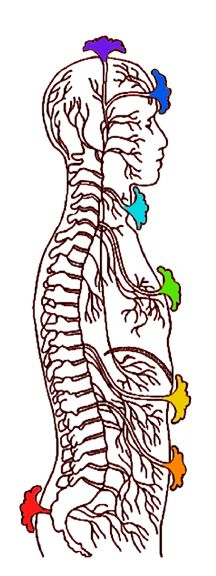 Chakras spinal side view