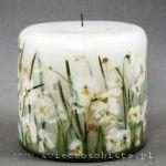 świeca z bratkami i przebiśniegami / white candle with dried spring flowers