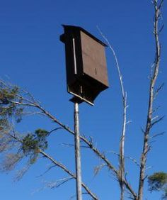 .  Bats like their houses like this one.  Our colony has been in our garden for 15 years.  Bats don't really like their houses in  trees.