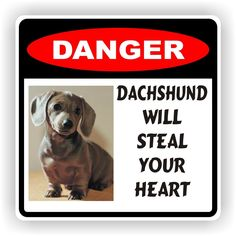 Online deals for dachshund dog supplies Cream Dachshund, Dachshund Funny, Dachshund Clothes, Mini Dachshund, Dachshund Puppies, Pet Dogs, Weiner Dogs, Dog Items, Dog Costumes