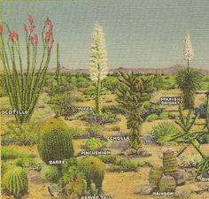 desert types