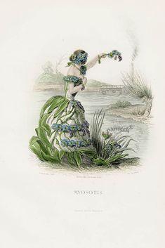 Grandville Fleurs Animees Prints 1867