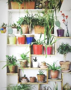 Cacti mingling with other house plants