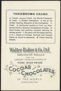 Theobroma Cacao [back] Cacao Benefits, Baker And Co, Binder Labels, Typography Design, Lettering, Coffee Soap, Cacao Chocolate, Le Cacao, Psychological Well Being
