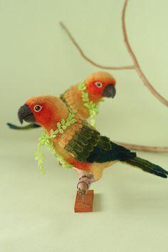 yoomoo parrots