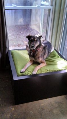 14 DIY Dog Beds – Craft Teen