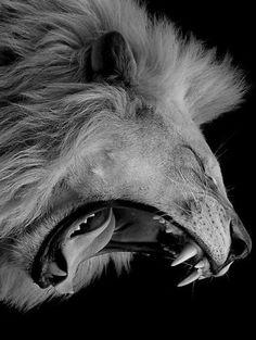 The Mystical Lion