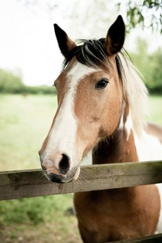 horse + fence | animals + equine photography