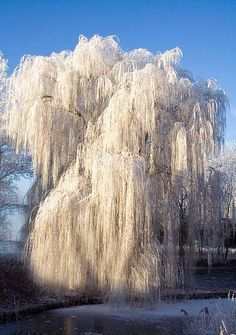 Incredible Ice Tree