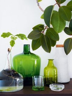 Green glass for st. Patrick's Day decor