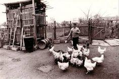 A jószág volt az aranya a népnek. Old Photographs, Old Pictures, Historical Photos, Hungary, Budapest, Farming, The Past, 1, Memories