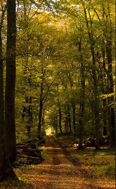 Autumn, Bridel, Luxembourg Copyright: John Mortier