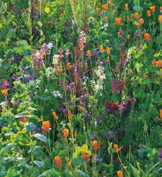 Compact growers so perfect even in an exposed site and very quick to flower. The perfect mix for almost instantly filling a dull patch with colour.