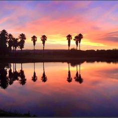 African sunsets...... #sunsets #sunsetphotography #sunsets #silverlakes #silverlakesgolfestate #silverlakesgolfclub Golf Estate, African Sunset, Sunset Photography, Sunsets, Camel, Celestial, Outdoor, Animals, Photos