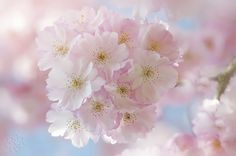 Soft on Spring by Jacky Parker on 500px