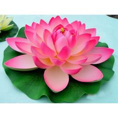 Most Beautiful Flowers, Exotic Flowers, Love Flowers, My Flower, Water Flowers, Sugar Flowers, Plastic Spoon Art, Lotus Flower Pictures, Trumpet Lily