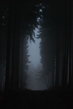 These woods are lovely, dark and deep, But I have promises to keep, And miles to go before I sleep, And miles to go before I sleep. — Robert Frost | Stopping By Woods on a Snowy Evening