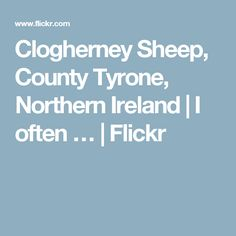 Clogherney Sheep, County Tyrone, Northern Ireland | I often … | Flickr